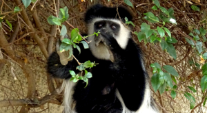 sensations-voyage-album-photos-kenya-walking-safari-crater-lake-singe-monkey-2