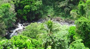 sensations-voyage-destination-guadeloupe-basse-terre-cascade-saint-claude