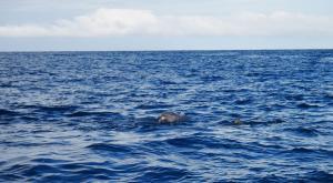 sensations-voyage-destination-guadeloupe-grande-terre-dauphin