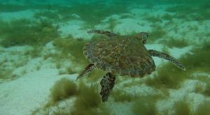 sensations-voyage-destination-guadeloupe-snorkeling-petite-terre-tortue-2