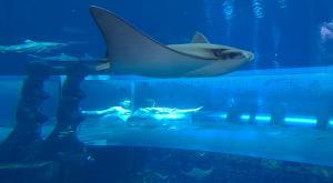 sensations-voyage-dubai-atlantis-aquaventure