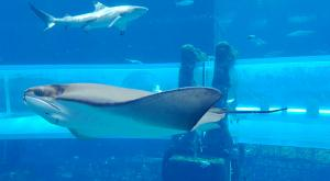 sensations-voyage-dubai-atlantis-toboggan-shark