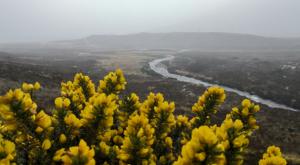sensations-voyage-ecosse-ile-skye-island-flower-jenet