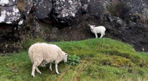 sensations-voyage-ecosse-ile-skye-island-paysage-cute-mouton