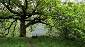 sensations-voyage-ecosse-loch-lomond-arbre