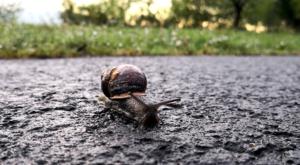 sensations-voyage-ecosse-loch-lomond-trossachs-escargot