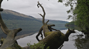 sensations-voyage-ecosse-loch-lomond-trossarchs-tronc-reflet