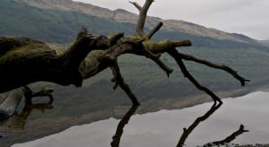 sensations-voyage-ecosse-loch-lomond-trossards-tronc-reflet-1