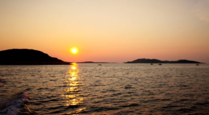sensations-voyage-sensationsvoyage-croatia-dolphin-watch-pakostane-sunset-croatie