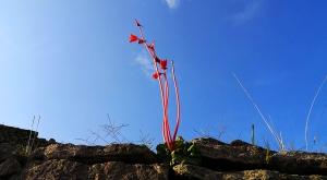 sensations-voyage-sensationsvoyage-perou-peru-machu-picchu-fleur-flower-nature
