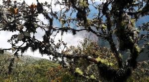 sensations-voyage-sensationsvoyage-perou-peru-machu-picchu-nature-forest-forret