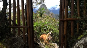sensations-voyage-sensationsvoyage-perou-peru-machu-picchu-window-lama