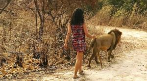 sensations-voyage-sensationsvoyage-voyages-senegal-bons-plans-marche-avec-les-lions-2
