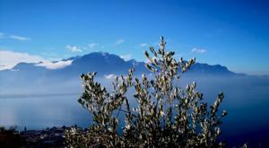 sensations-voyage-voyage-photos-suisse-landscape-paysage-olivier