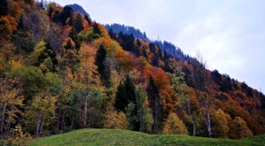 sensations-voyage-voyage-photos-suisse-lucerne-luzern-arbres-colors-forest