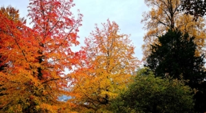sensations-voyage-voyage-photos-suisse-lucerne-luzern-arbres-colors