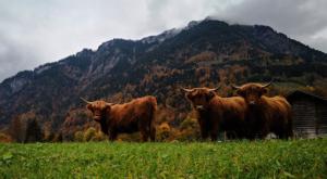 sensations-voyage-voyage-photos-suisse-lucerne-luzern-highland-cows-2