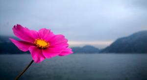sensations-voyage-voyage-photos-suisse-lucerne-luzern-seehotel-kastanienbaum-lake-flower