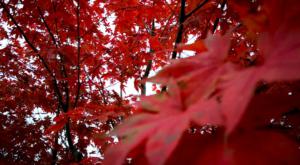 sensations-voyage-voyage-photos-suisse-lucerne-luzern-seehotel-kastanienbaum-red-tree