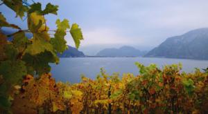 sensations-voyage-voyage-photos-suisse-lucerne-luzern-seehotel-kastanienbaum-vignes