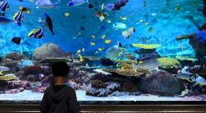 sensations-voyage-voyages-coree-du-sud-korea-seoul-aquariuù-coex-kid-recif-coral
