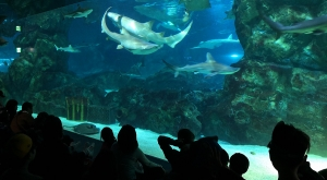 sensations-voyage-voyages-coree-du-sud-korea-seoul-aquarium-requins-spectacle-show