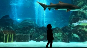 sensations-voyage-voyages-coree-du-sud-korea-seoul-aquarium-shark-boy