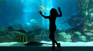 sensations-voyage-voyages-coree-du-sud-korea-seoul-aquarium-shark-sam
