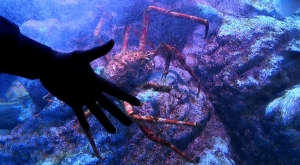 sensations-voyage-voyages-coree-du-sud-korea-seoul-araignée-geante-crabe