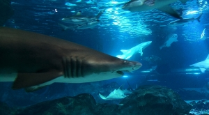 sensations-voyage-voyages-coree-du-sud-korea-seoul-coex-shark