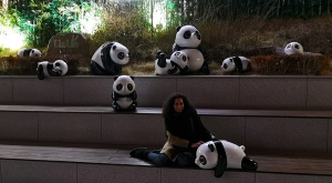 sensations-voyage-voyages-coree-du-sud-korea-seoul-tower-panda-pandas