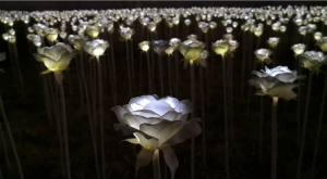 sensations-voyage-voyages-coree-du-sud-korea-seoul-tower-tour-night-ddp-desing-plaza-roses