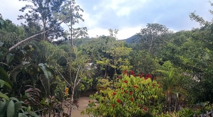 sensations-voyage-voyages-martinique-paysage-jardin-savane-escalve