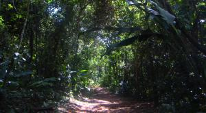 sensations-voyage-voyages-photos-guyane-foret-amazonienne