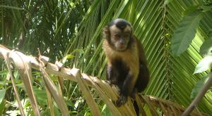 sensations-voyage-voyages-photos-guyane-foret-singe