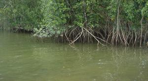 sensations-voyage-voyages-photos-guyane-mangrove-2
