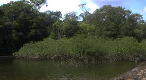 sensations-voyage-voyages-photos-guyane-mangrove