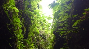 sensations-voyage-voyages-photos-martinique-gorges-falaise-canyoning-nature-canyon-foret-tropicale