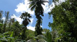 sensations-voyage-voyages-sainte-lucie-palmiers