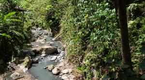 sensations-voyage-voyages-sainte-lucie-riviere-nature