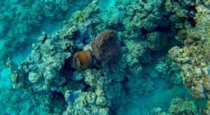 sensations voyage photos bali menjangan snorkeling-3