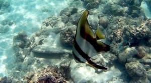 sensations voyage photos bali menjangan snorkeling-4