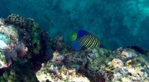 sensations voyage photos bali menjangan snorkeling