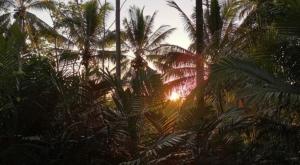sensations voyage photos bromo national park jungle