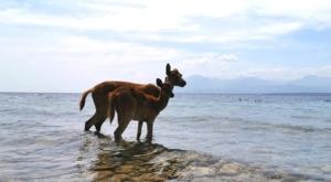 sensations voyage photos indonesie java bali menjangan bliche parc national