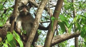 sensations voyage photos indonesie java bali menjangan monkey grey parc national