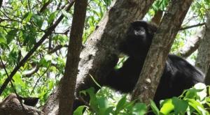 sensations voyage photos indonesie java bali menjangan monkey parc national