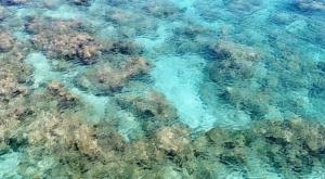 sensations voyage photos indonesie java bali menjangan turqoise water
