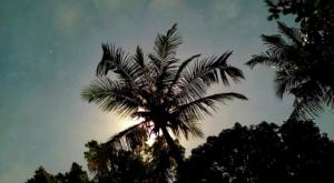 sensations voyage photos indonesie java night coconut treel