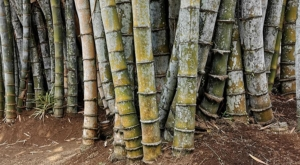 sensations voyage photos java bambou forest